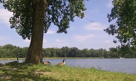 JC Murphey Lake at Willow Slough