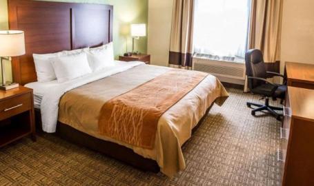 Single King Room Comfort Inn Hotel Hobart