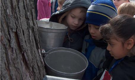 Lake County Parks Outdoors Maple Syrup Time Deep River Hobart