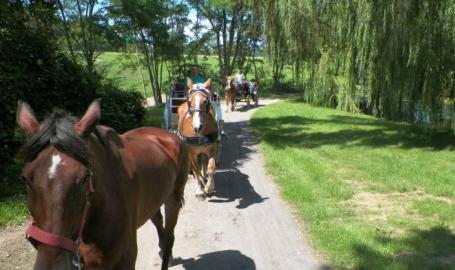 Serenity Springs Hotel Getaway LaPorte Carriage Rides
