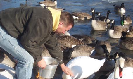 Serenity Springs Hotel Getaway LaPorte Feeding the Swans