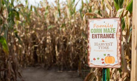 Harvest tyme pumpkin patch corn maze