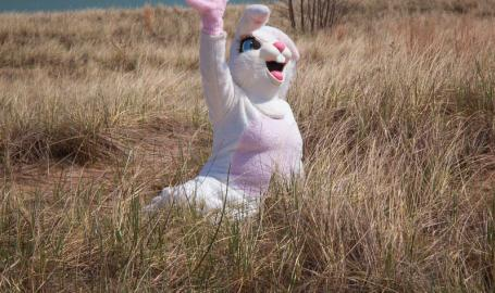 Easter Bunny on the beach
