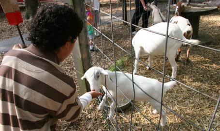 County Line Orchard Things to Do Hobart Petting Zoo