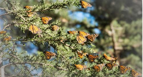 896_butterflies.jpg