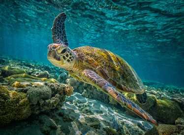 IMAX_GBR3D Sea Turtle