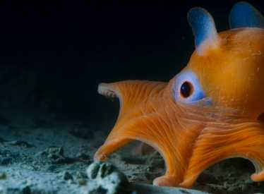 IMAX_OceansOBP_Octopus