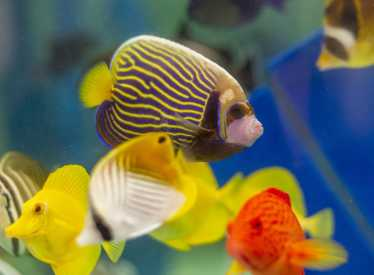 Island Life Coral Triangle Fish