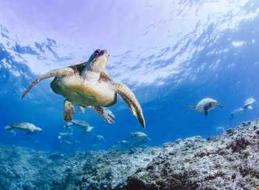 Turtle Odyssey1