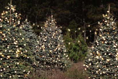 A Very Chisholm Christmas