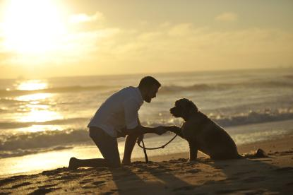 Man & dog on beach at sunset