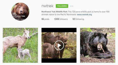 Northwest Trek Instagram