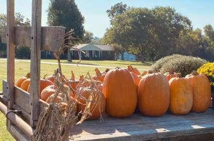 McNeese Family Farm Fall Festival