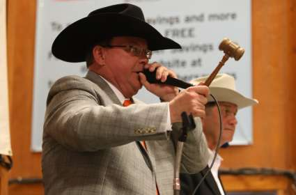Mule Day Auctioneers Championship