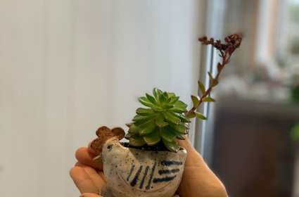 Miniature Chicken Succulent Planter Pottery Making Class