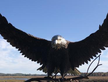 The Montezuma National Wildlife Tour Adventure