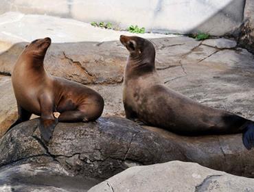 World Sea Lion Day