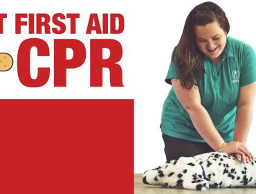 Pet First Aid + CPR