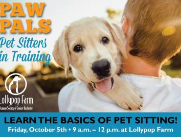 Paw Pals: Pet Sitters in Training
