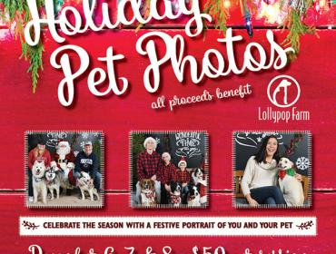Holiday Pet Photos