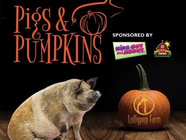Pigs & Pumpkins