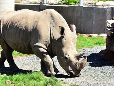 World Rhino Day