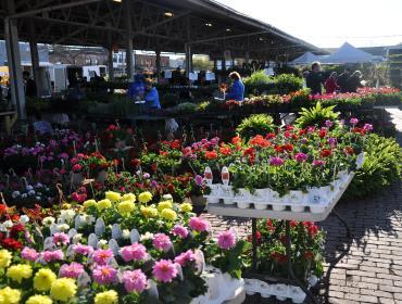 Flower City Days at the Public Market