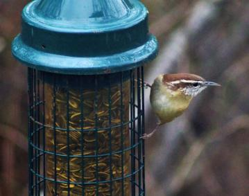 https://assets.simpleviewinc.com/simpleview/image/upload/crm/newportri/11-19-18-carolina-wren-feeder-cropped-2_e32ffd2d-5056-b3a8-49dbe6941848b334.jpg