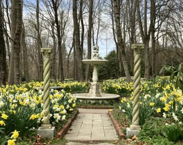 https://assets.simpleviewinc.com/simpleview/image/upload/crm/newportri/blithewold-daffodils-_credit-Discover-Newport35_e756946c-5056-b3a8-49a824d5c2c90e8e.jpg