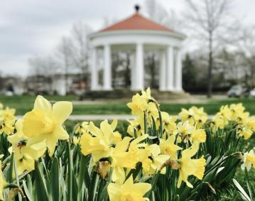 https://assets.simpleviewinc.com/simpleview/image/upload/crm/newportri/daffodils-king-park_credit-Discover-Newport_31_9cbad0af-5056-b3a8-4903570df7649a02.jpg