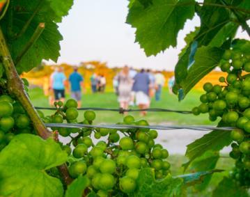 Newport Vineyards Tours