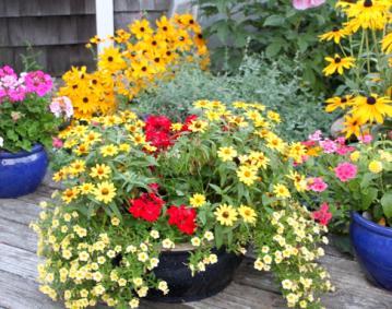 Moore Blooms