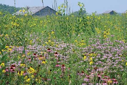 Prophetstown State Park wildflowers