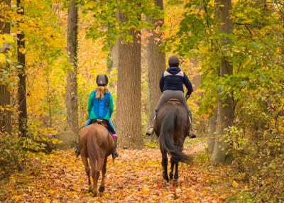Horseback Riding Fall