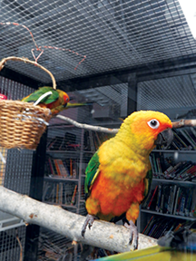 Natural History Sun Conures