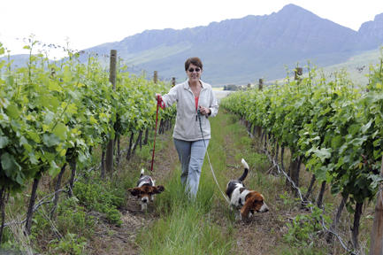 Dogs in Vineyard