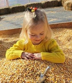 A young girl plays in a bin full of corn at Paulus Farm Market outside of Mechanicsburg, PA.