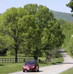Van on Road - Rental Cars