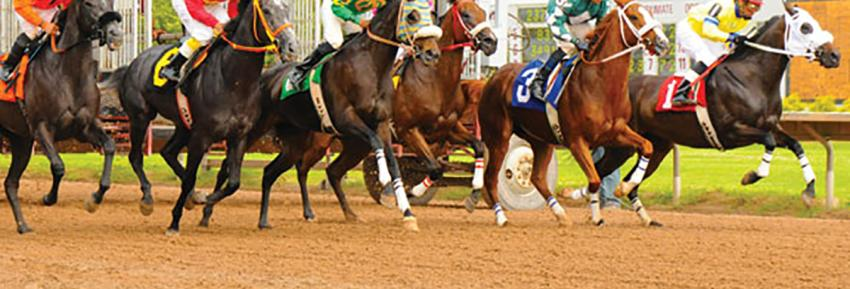 Horses race out of the starting area during a race at Finger Lakes Gaming and Racetrack