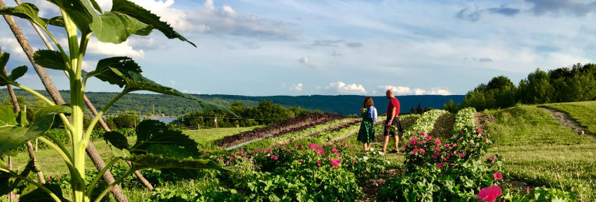 A view of the Bristol Hills from Wegman's organic farm