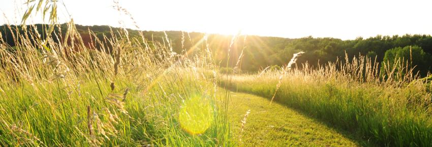 The sunsets on a grass field found at Ganondagan's Native American Culture Center
