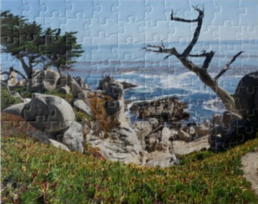 Ghost Tree Monterey County CA Puzzle