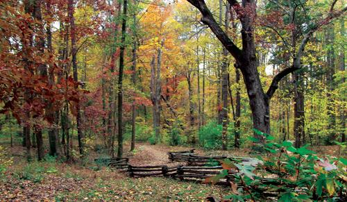 Fallen Leaves On Forest Benches at Big Trees