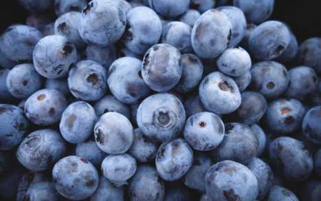 Canwest Farms Blueberries