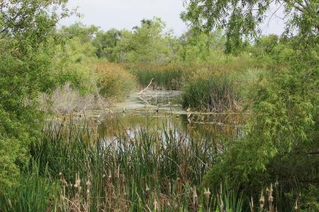The beautiful Blackbird Pond (Photo by Bill Wise)