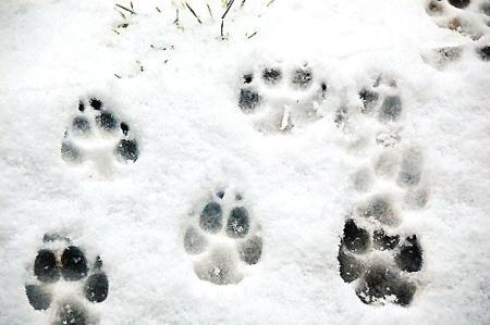 Bring your canine besties out to McCloud Nature Park near North Salem for a winter hike!
