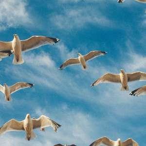 Migration Birding Hike