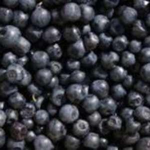 Blueberry Fun Farm Weekend