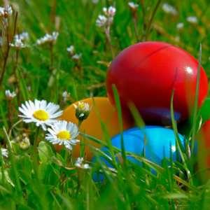 CANCELED Chellberg Farm Easter Egg Hunt