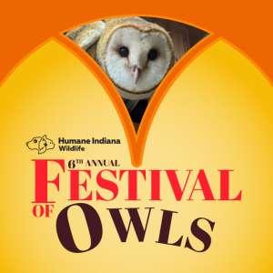Festival of Owls